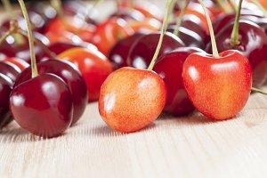 fresh crop of cherries