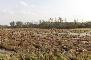 swamp hummock