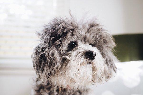 Animal Stock Photos - Scruffy Fluffy Puppy