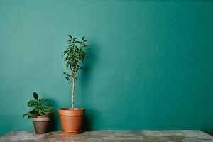 Plants in flowerpots on table
