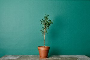 Plant in flowerpot on table on green
