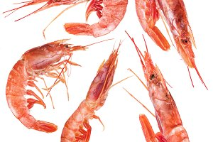 Five shrimps. File contains clipping