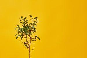 Houseplant in flowerpot