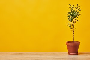 Plant in flowerpot at wooden table
