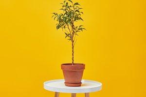 plant in flowerpot on table