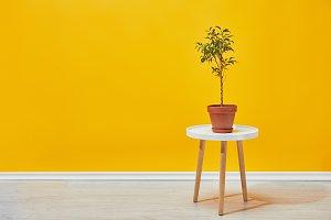 plant in flowerpot on little table
