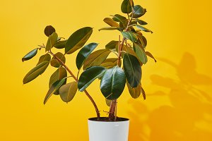 Houseplant with green leaves
