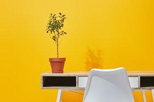 Plant in flowerpot on wooden table n
