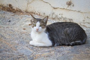 Cat on Crete, Greece