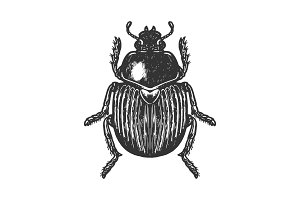 Scarab beetle engraving vector