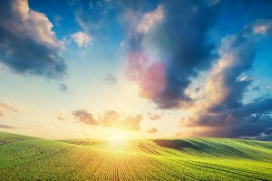 Green field landscape and sunset.