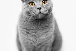 Fluffy grey cat sitting on white bac