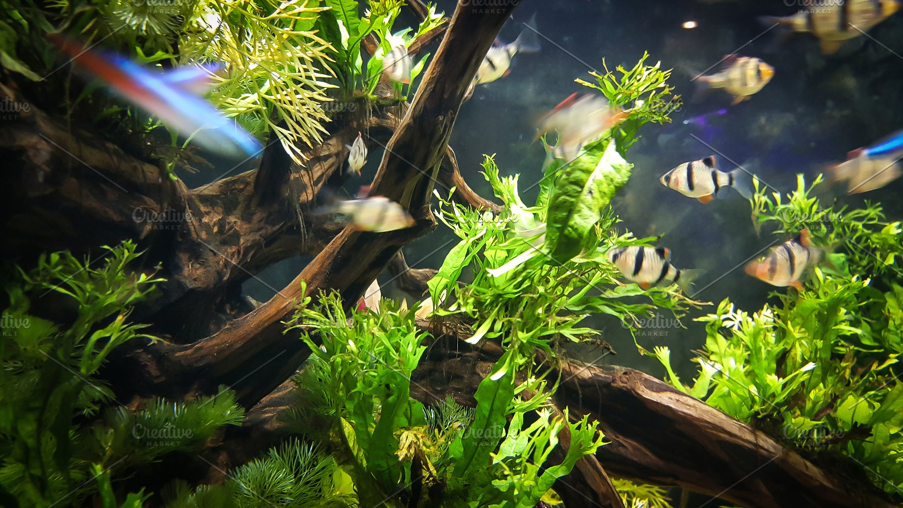 Decorative aquarium plants