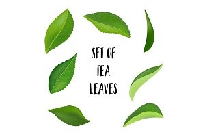 Tea leaves with drops isolated on a