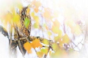 owl bird of prey among colored