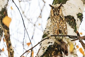 owl in the rain sitting on a branch
