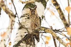 owl sits among the branches of an