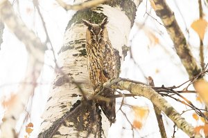 owl sits among the branches on an