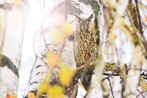owl with big orange eyes sits among