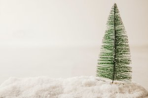 christmas tree or fir with snow and