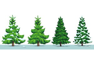 Christmas tree, green fir, spruce