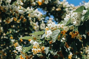 Spring Flowers Vintage