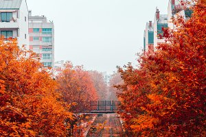 Autumn foggy view