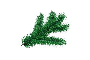 Fir-tree branch. Vector element
