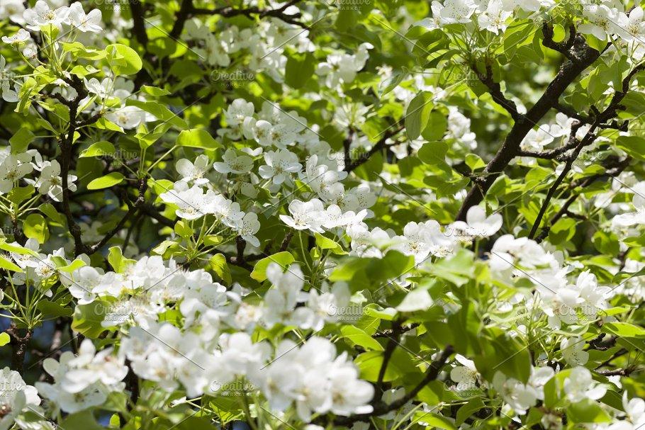 White Flowers Tree Nature Photos Creative Market