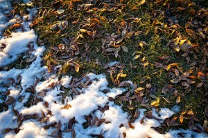 Frosted autumn leaves background