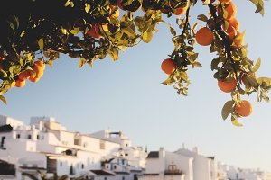 Andalusian oranges