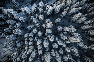 Snowy trees from above