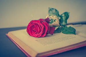 Book and rose 3