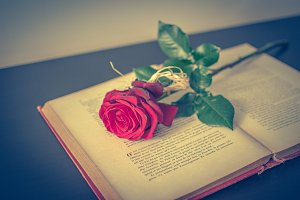 Book and rose 4