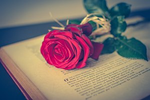 Book and rose 5