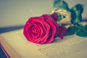 Book and rose 6