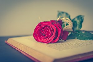 Book and rose 2