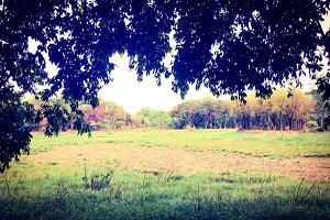 Landscape of field