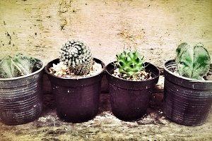 Cactus in grunge background