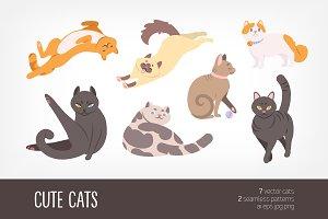 Cute cats bundle