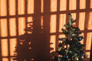 Christmas tree near orange wall in