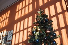 Christmas tree near orange wall in by  in Architecture