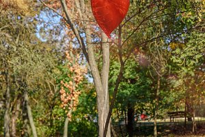 red balloon flies in the autumn park