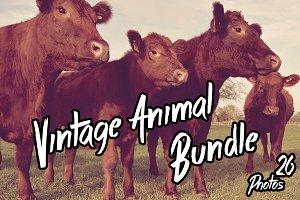 Vintage Animal Bundle (26Photos)