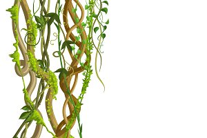Twisted wild lianas branches banner.