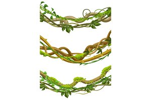 Twisted wild lianas branches set.