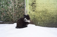Homless cat in the winter
