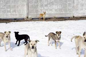 Homless dogs. Winter time