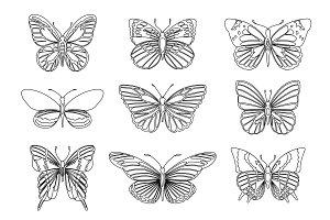 Set of butterflies for design
