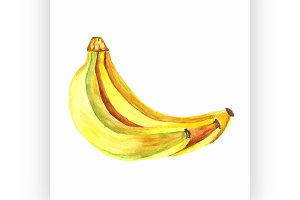 bananas. Vector watercolor painting